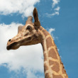 Giraffe portrait on sky background - Lizenzfreies Foto