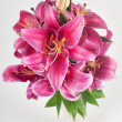 Lily in vase — Stock Photo