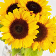 Sunflowers in studio — Foto Stock
