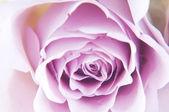 Pastell Schatten Rosen — Stockfoto