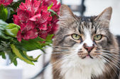 Portrait of cat — Photo