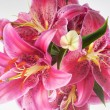 Stock Photo: Lily in vase