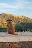 Dog sitting and watching on the mountains — Stock Photo