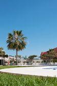 Palm near swimming pool — Stock Photo