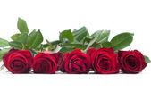 Red roses — Foto de Stock