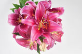 Pink lily in vase — Stock Photo