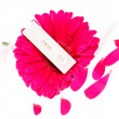 Stock Photo: Positive pregnancy test and pink gerbera