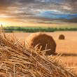 Straw haystacks on the grain field — Stock Photo