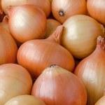 Yellow onion — Stock Photo