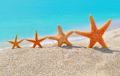 Starfishes on the beach — Stock Photo