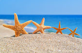 Starfishes on the beach — Photo