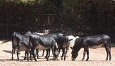 Animales en el parque safari. parque nacional brijuni. croacia — Foto de Stock