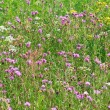 Meadow flowers. Shallow depth of field — Stock Photo