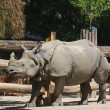 Stock Photo: Rhinoceros in world's oldest zoo. Vienna, Austria
