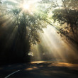 Rays of the sun on a misty morning. — Stock Photo