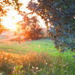 Stock Photo: Sunset. Forest glade.