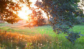 Sunset. Forest glade. — Stock Photo