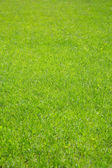 Green grass. — Stock Photo