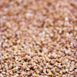 Buckwheat — Stock Photo