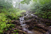 Mountain stream. — Stock Photo
