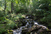 Forest stream. — Stock Photo