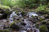 Córrego na floresta. — Foto Stock
