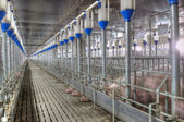 Pork plant — Stock Photo