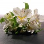 boeket van kleurrijke bloemen — Stockfoto #14479113