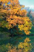Sjön, hösten trä och den blå himlen — Stockfoto