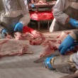 Pork processing meat food industry — Stok Fotoğraf #17166023