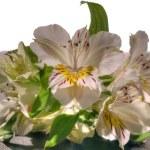 boeket van kleurrijke bloemen — Stockfoto #18559669