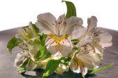 五颜六色的花束 — 图库照片