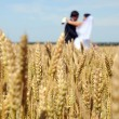 Stock Photo: Golden ears on field, in background of newlyweds, su