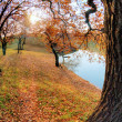 Lake, autumn wood and the blue sky — Stockfoto