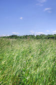 Grass on steppe — Stock Photo
