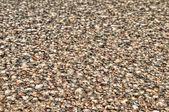 Fundo natural - conchas do mar — Foto Stock