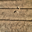 Texture of old wooden background — Stock Photo