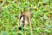 Squirrel in the grass — Stock Photo