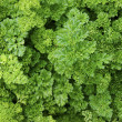 Verdure,salad — Stock Photo