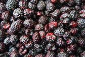 Fresh blackberry on white background — Stock Photo