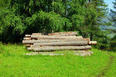 Freshly cut tree logs piled up — Stock Photo
