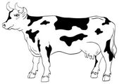 Cow isolated on a white background — Stock Vector