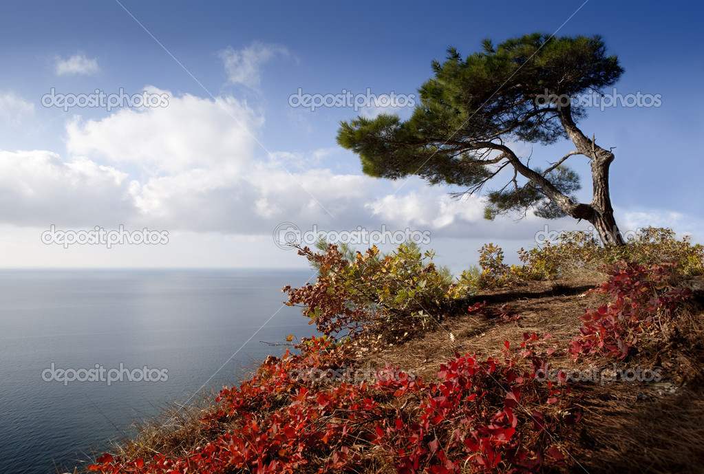 Autumn tree on a coastline. — Stock Photo #16018221