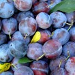Organic plums — Stock Photo