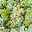 Grapes background — Stock Photo