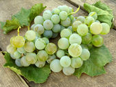 White grape clusters with leaves — Stock Photo