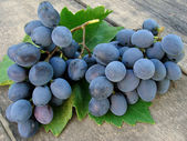 Grape clusters with leaf — Stock Photo