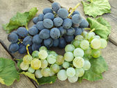 Grape clusters with leaves — Stock Photo