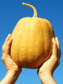 Hand with pumpkin — Stock Photo
