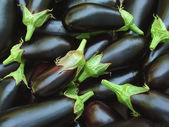Eggplants harvest — Stock fotografie